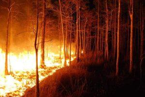 Правила за поведение при горски и полски пожари